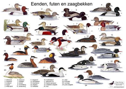 Verrassend www.eendenkooistokman.nl GD-69